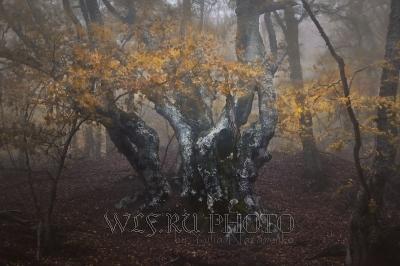 Фото золотая осень в лесной чаще