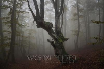 Фото дерево в лесной чаще в тумане