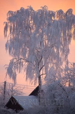 вечер в русской деревне, фото