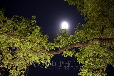 фотография весны, ветка дерева со свежей зеленью на фоне ночного неба