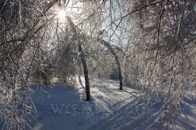 фотография против солнца сквозь ветки дерева