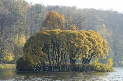осенняя природа, остров на пруду