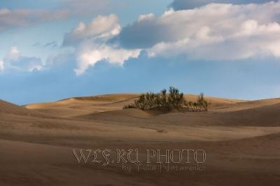фототур по Мангышлаку. Песчаная пустыня.