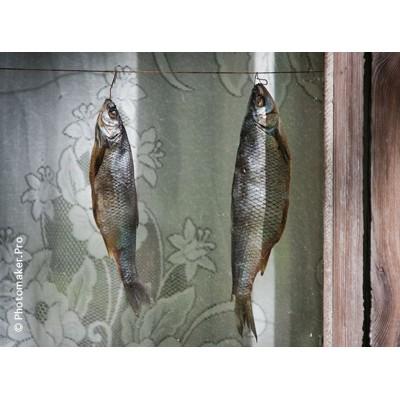 Москва-Архангельск. ч.1: В поисках деревянных мостовых