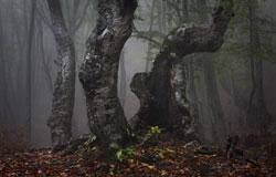 Деревья, лес