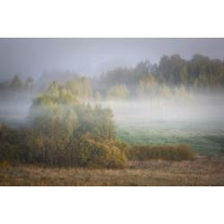Запах тумана