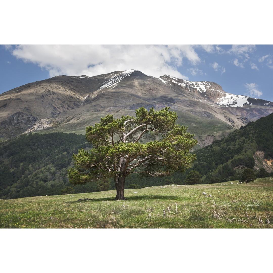 Страж альпийских лугов