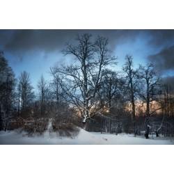 Зимний пейзаж 17VZ0119