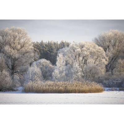 Как фотографировать зимой на морозе?