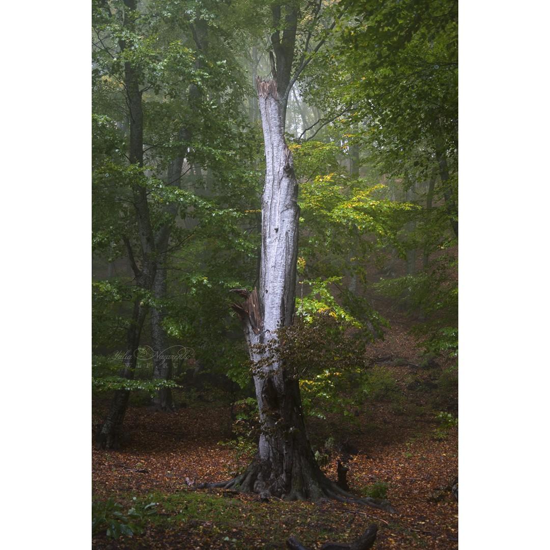 Лесной эльф №3
