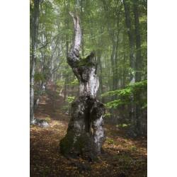 Лесной эльф №2
