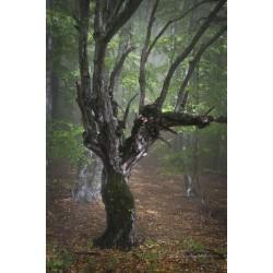 Лесной эльф №1
