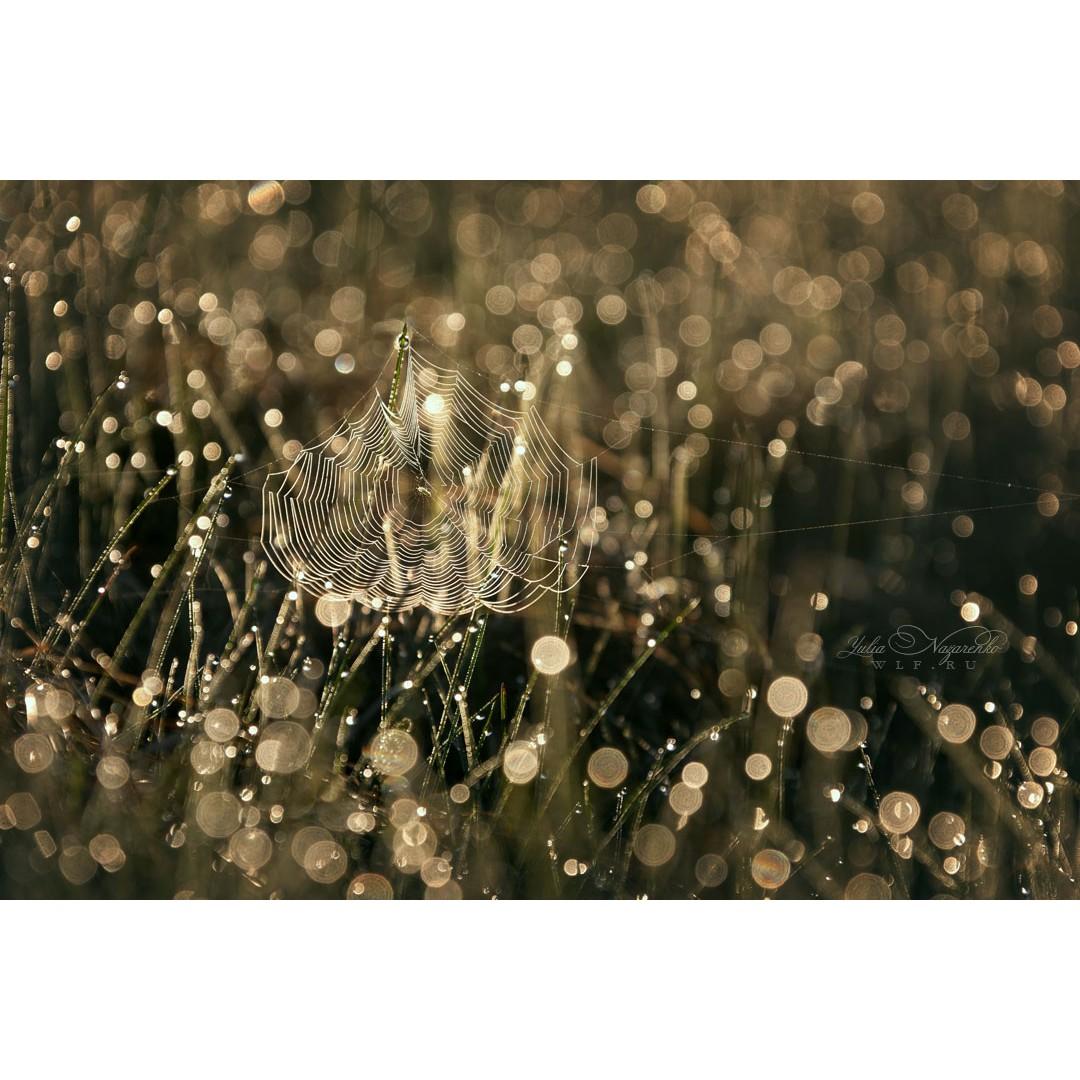 Паутинка в каплях росы