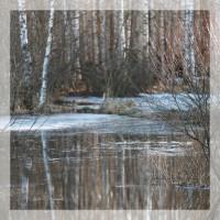 14 и 21.04.2019 Фототур: Мещёрские разливы.