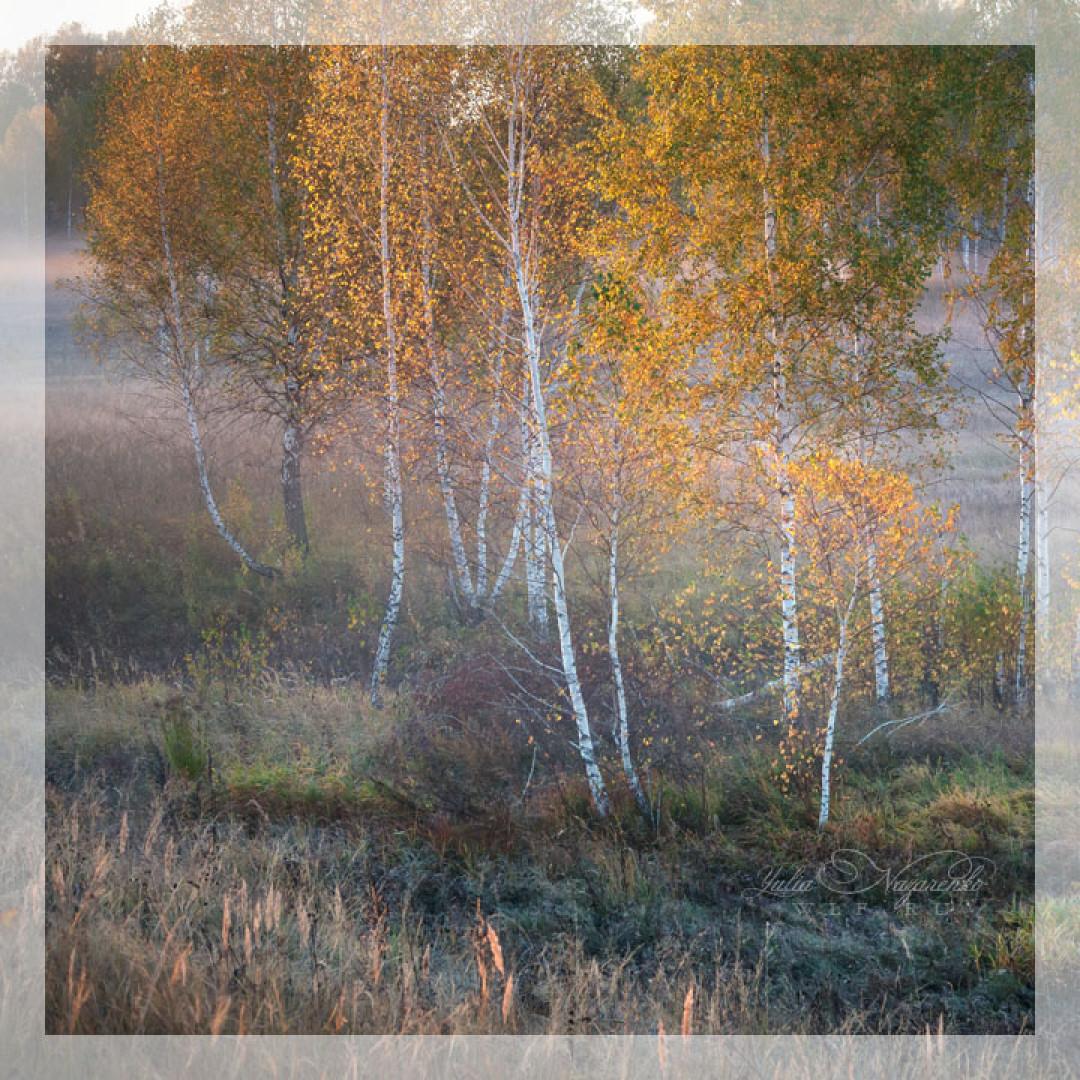 26-27.09 и 03-04.10.2020 Фототур: Ивановская область, Плёс.