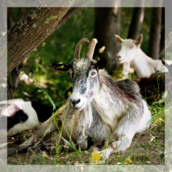 05.07.2020 Фототур: Сенокос, завтрак на козьей ферме.