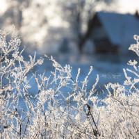 Фототур: Покрова на Нерли в снегопад - 21.01.2018