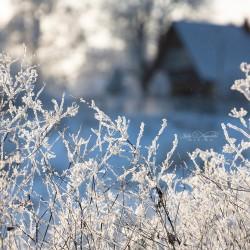 Фототур одного дня: Шатурские озера. 17.01.2018