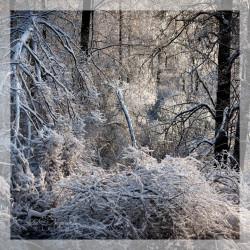 28.01.2020 Фототур: Снегопад в усадьбе Орловых.