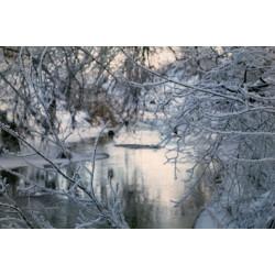 16.02.2021 Фототур: Московская - Ярославская области.